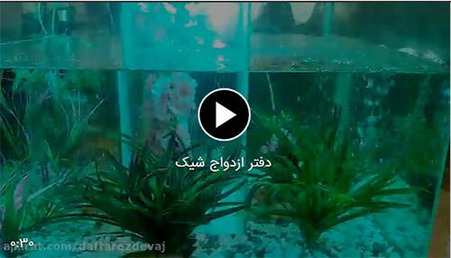فیلم دفتر ازدواج با سفره عقد در تهران